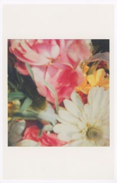 Cy Twombly flower polaroids