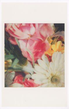 Flower polaroids