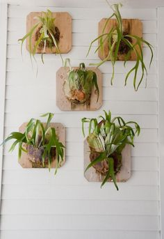 wall mounted trophy staghorn ferns post office via Gardenista Air Plants, Indoor Plants, Potted Plants, Garden Art, Garden Plants, Garden Walls, Staghorn Fern, Container Gardening, Succulent Containers