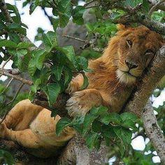 Super Ideas Funny Cats Sleeping So Cute Baby Animals, Funny Animals, Cute Animals, Mundo Animal, My Animal, Big Cats, Cool Cats, Beautiful Cats, Animals Beautiful