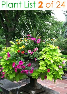 24 designer plant lists for beautiful container gardens & colorful mixed flower pots combinations: great patio planting ideas & backyard landscape designs! – A Piece of Rainbow garden landscape porches 24 Stunning Container Garden Planting Ideas Container Flowers, Container Plants, Container Gardening, Flower Gardening, Vegetable Gardening, Organic Gardening, Potted Plants Patio, Outdoor Planters, Porch Planter