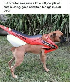 Dirt Bike For Sale Runs A Little Ruff Couple Of Nu. ~ Memes curates only the best funny online content. Memes Humor, Funny Car Memes, Funny Animal Jokes, Funny Animals, Funny Cute, Really Funny, Hilarious, Bike Humor, Plaid Blazer