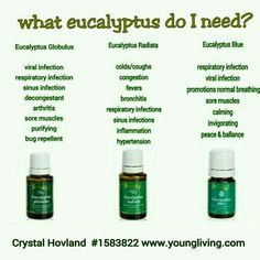 Young Living Essential Oils: Eucalyptus - Which one? Essential Oils 101, Essential Oil Blends, Young Living Oils, Young Living Essential Oils, Living Essentials, Chakra, Yl Oils, Wellness, Healing Herbs