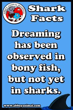 Facts About Sharks Shark Facts, Sharks, History, Historia, Shark