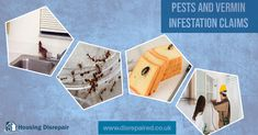 Pests and Vermin Infestations Control Issues, Pest Control, Mold Making, Being A Landlord, United Kingdom, England, Bed Bugs Treatment