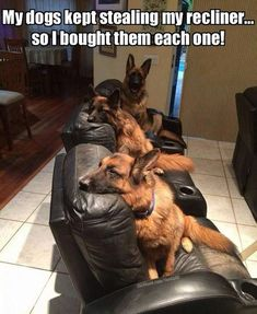 Best photo ever!! #GermanShepherd #DogMom #DogDad #AdoptDontShop #DogLover #LoveDogs #RescueDog #ShelterDog