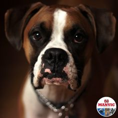Coping with a pet loss is different. Learn ways to help you during this time. Pet Loss, Safety Tips, All Dogs, Your Pet, Pup, Security Systems, Animals, Instagram, Loss Of Pet