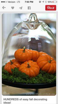 dome with mini pumpkins