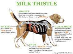 Milk Thistle - Natural Liver Support for Dogs