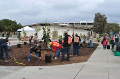 California's First Ever Public Fruit Park in the County of Los Angeles   Reclaim, Grow, Sustain