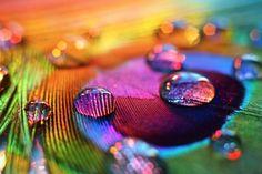 LIA Leuk Interieur Advies/Lovely Interior Advice: Colour Blocking
