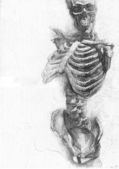 Skeleton drawings by Paul Schwarz