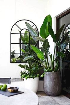 30 Amazing Indoor Garden For Apartment Design Ideas And Remodel. If you are looking for Indoor Garden For Apartment Design Ideas And Remodel, You come to the right place. Below are the Indoor Garden . Interior Design Plants, Plant Design, Garden Design, Zigarren Lounges, Plantas Indoor, Decoration Plante, Best Indoor Plants, Indoor Plant Pots, Indoor Gardening