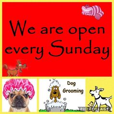 Stop by the Shop and Join us for Our very First Shampooch Sunday🐾🐾 FreeShampoo upgrade with any Sunday Spa Service ! Stop in for more details ... offer expires 12/31/17 #WGB #Chester #NJ