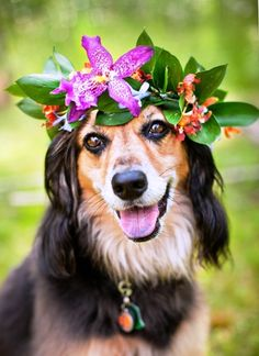 Wedding dog flower crown Toni Kami ❀Flowers in their coats❀