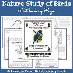 nature study of birds