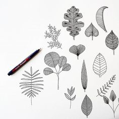 These leaves will be used for some fabric patterns in the coming weeks.  #illustrations #illustration #drawing #scribble #doodle #linedrawing #art #artwork #fineliner #penwork #sketch #graphicdesign #blackandwhite #linework #penwork #florals #floral #prints #leaves #loveobjects #lüneburg #hamburg #germany #interiordesign #homedecor #patterns #handmade