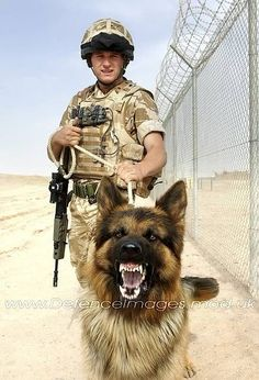 - All or Nothing Tattoo and Art Studio Military working dogs. - All or Nothing Tattoo and Art Studio Military Working Dogs, Military Dogs, Military Police, Army Dogs, Police Dogs, Malinois, My Champion, Schaefer, German Shepherd Dogs