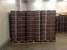 Pallets 80 cajas de piña MD2 de 12 kg #piñasdecostarica #pineapples Piñas ,pineapples ,ananas de Costa Rica ,frutas tropicales ,fruits ,mercabarna ,piñasdecostarica, mercamadrid@bribrifruitscostarica #piñas #pineapple #pineapples #ananas #frutastropicales #dieta #nutricion #salud #costarica #caribe #puravida #instanfood #piñasdecostarica #fruterias #mercados #mercamadrid #mercabarna #mercasevilla #spain #bribrifruits #disfrutadelapiña