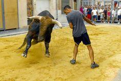 torodigital: Un toro de Algarra abre las fiestas de San Roque ...