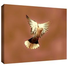 'Pink Dove1' by Lindsey Janich Gallery Wrapped on Canvas