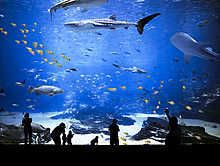 Big Tank IV, picture from the series Georgia Aquarium by Hiepler & Brunier , artist of category FINE WORKS at photo art editions LUMAS Georgia Aquarium, Oceans 7, Shark Silhouette, Pictures Online, Art Pictures, Photo D Art, People Photography, Magazine Art, Online Art
