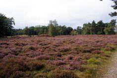 We wandelen de Groene Wissel 'Zeister Landgoederen en Slot Zeist'. Een mooie, afwisselende boswandeling van 17km, o.a. over landgoed Bornia en Heidestein.