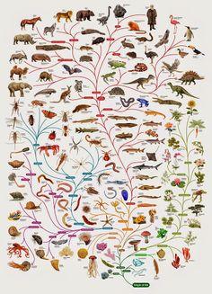BiologyCorner - Google+