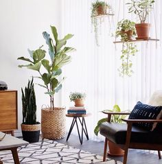 Balançoires plantes