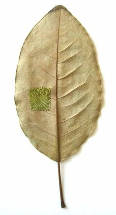 UK-based artist Susanna Bauer has exceptional needlework skills and, we're guessing, a very gentle touch, that enable her to use dried leaves as a canvas for some of her miniature art pieces. Land Art, Diy Fleur, Bordados E Cia, Deco Nature, Embroidered Leaves, Make Do And Mend, Art Textile, Arte Floral, Darning