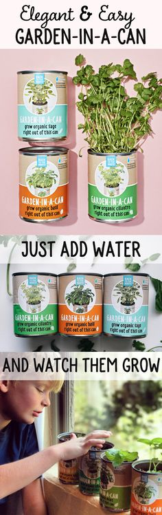 Beginner friendly Garden-in-a-Can Herb sets for your edible garden. Perfect for urban or indoor gardens this summer. Just add water and grow organic summer herbs for months!  Photos by Martha Stewart Living @hartslocalgrocers Rachel Goode.in.the.garden