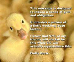 Fluffy Duck LOL