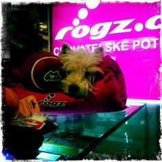 Rogzee tvrdě pracuje v obchodě ROGZ