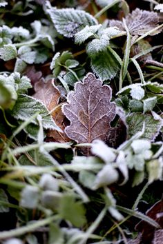 nature by Victoire Meneur A Touch Of Frost, Natural Instinct, Frozen In Time, The Fragile, Belleza Natural, Natural Forms, Jack Frost, Autumn Leaves, Mother Nature