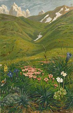 Alpine Flowers Tyrol 1892 Lithograph by Ernst Heyn  by carambas, $20.00