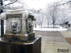 """Lion Head Fountain - The Class of 1903 donated the """"Lions Fountain"""" Memorial to the university as a drinking fountain. It was completed in the fall of 1904. The fountain was turned off and the drains plugged when the statue was relocated for the construction of Stanley Coulter Annex sometime between 1923 and 1931; it remained non-functional for many years. Water connections to the fountain were restored in 2001 through the fundraising efforts of the Purdue Reamer Club."""