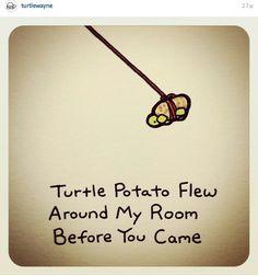 Turtle potato flew aroud my room before you came Cute Turtle Drawings, Animal Drawings, Cute Drawings, Turtle Meme, Cartoon Turtle, Sheldon The Tiny Dinosaur, Kawaii Turtle, Tiny Turtle, Kawaii Doodles