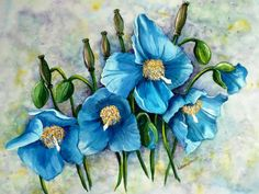 MECONOPSIS Himalayan Blue Poppy