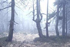 Efectos sobre la vegetación: La lluvia ácida produce daños importantes en la vegetación, y acaba con los microorganismos fijadores de nitrógeno. Un efecto indirecto muy importante es el empobrecimiento de ciertos nutrientes esenciales por lo que las plantas y árboles no disponen de estos y se hacen más vulnerables a las plagas.