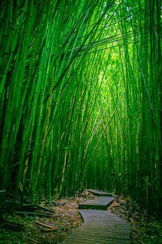 Bamboo Forest, Haleakala National Park, Maui, Hawaii | Flickr