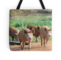 'happy little ginger piglets' Tote Bag by shotbysas . Framed Prints, Canvas Prints, Piglets, New Bag, Bag Sale, Laptop Sleeves, Cow, Finding Yourself, Iphone Cases