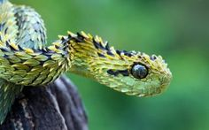 wallpaper-feathered-serpent