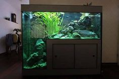 amazing fish tank with a deep spot