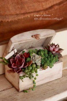 Ecco 20 splendide decorazioni con le piante grasse! Lasciatevi ispirare…