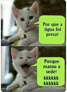Ideas Funny Humor Quotes Hilarious Faces For 2019 Memes Humor, Comedy Memes, Humor Quotes, Funny Shit, Funny Jokes, Hilarious, Gato Do Face, Funny Images, Funny Photos