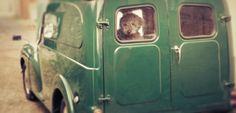 houndworthy dog in morris minor van European Transport, Automobile, Little Trailer, Morris Minor, Vintage Vans, Leather Dog Collars, Cute Cars, Small Cars, Commercial Vehicle