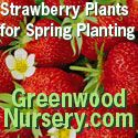 strawberryplants.org.  Everything Strawberry..how to grow, nutritional information, recipes, etc.