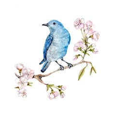 Mountain Bluebird And Sprin Blossom, birds and flowers, violet blue... ($38) ❤ liked on Polyvore featuring home, home decor, wall art, flower painting, photo wall art, bird painting, water color painting and blue painting