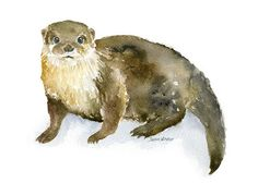 River Otter watercolor giclée reproduction. Landscape/horizontal orientation. Printed on fine art paper using archival pigment inks. This quality printing allows over 100 years of vivid color in a typ