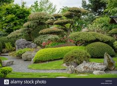 Mountain pine, Mugo pine (Pinus mugo), Japanese garden Stock Photo #japanesegardening
